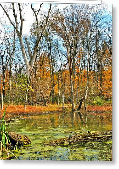 Lilly Pads Greeting Cards - Zig Zag Greeting Card by Frozen in Time Fine Art Photography
