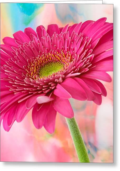 Gerbera Daisy Abstract Greeting Card