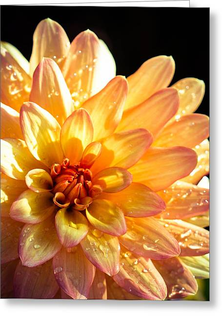 Zinnia Greeting Card