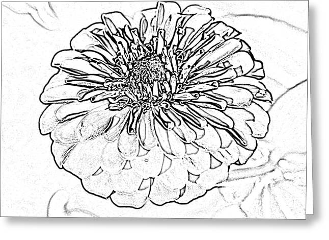 Zinnia Flower Floral Decor Macro Closeup Square Format Black And White Sketch Digital Art Greeting Card