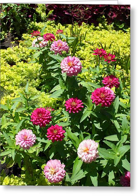 Greeting Card featuring the photograph Zinnia Garden by Ellen Tully