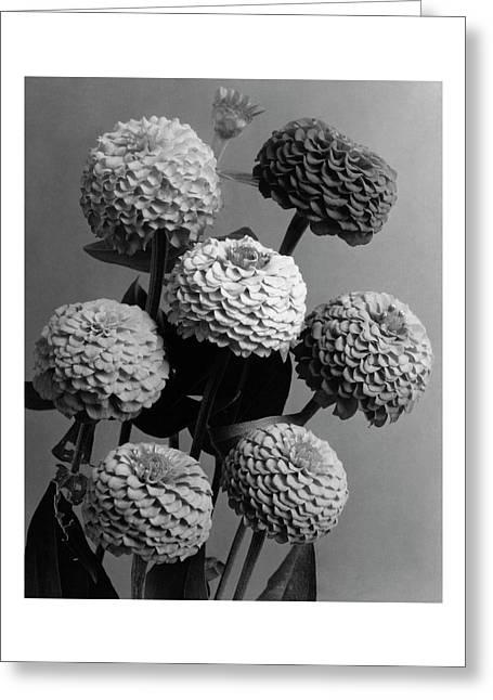 Zinnia Lilliput Flowers Greeting Card