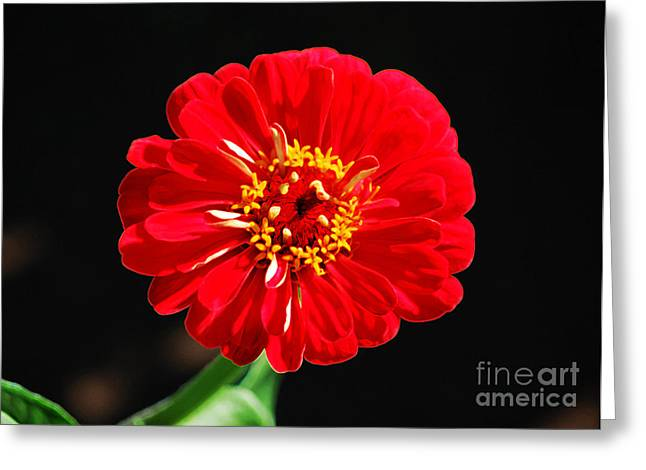 Zinnia Red Flower Floral Decor Macro Accented Edges Digital Art Greeting Card