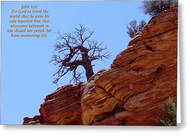Zion John 3-16 Greeting Card by Nelson Skinner