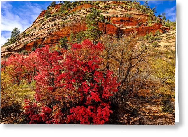 Zion Mountain Maples Greeting Card by Greg Norrell