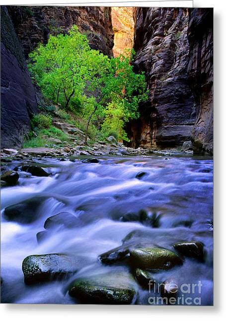 Zion Narrows Greeting Card by Inge Johnsson