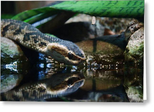 Greeting Card featuring the photograph Zoo 039 by Andy Lawless