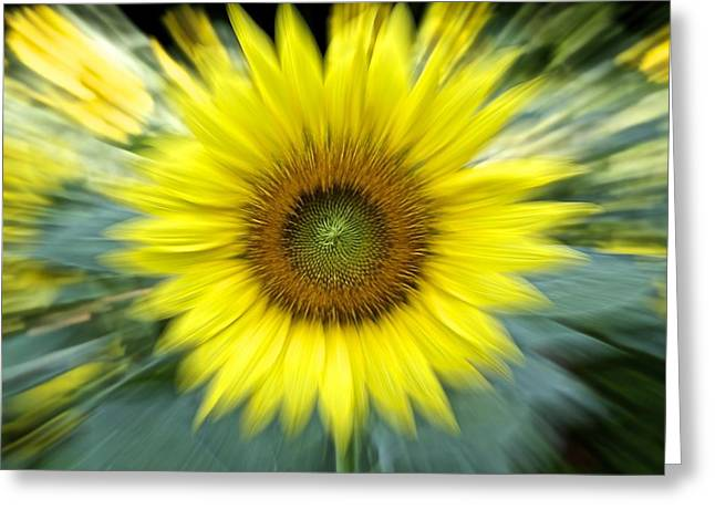 Zoom Sunflower Greeting Card