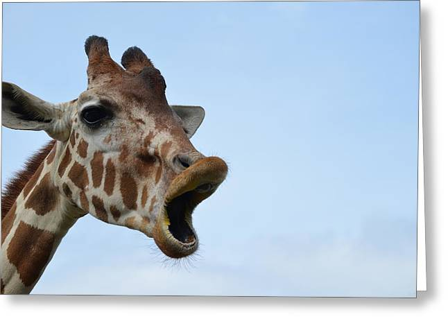 Zootography Giraffe Honking Greeting Card by Jeff at JSJ Photography