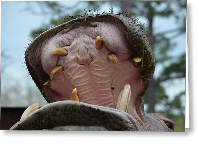 Zootography Of Open Wide And Brush Your Teeth Greeting Card by Jeff at JSJ Photography