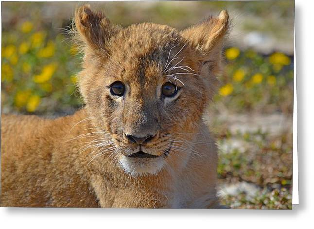 Zootography3 Zion The Lion Cub Greeting Card by Jeff at JSJ Photography