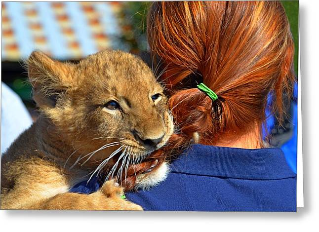 Zootography3 Zion The Lion Cub Likes Redheads Greeting Card by Jeff at JSJ Photography