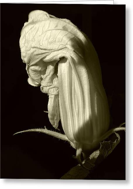 Zucchini Flower Greeting Card