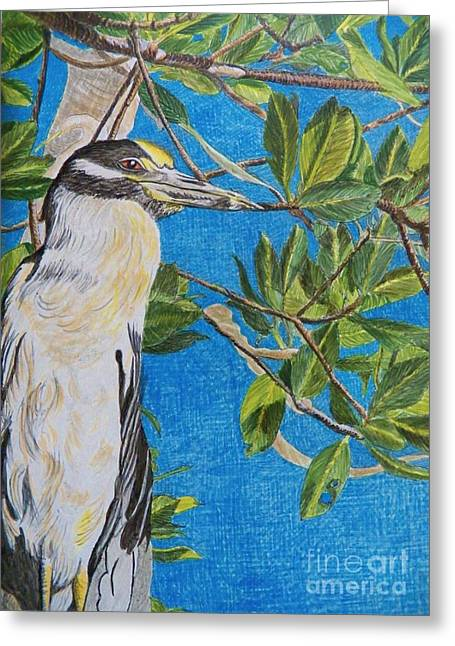 Yellow Crested Night Heron Painting Greeting Card by Judy Via-Wolff