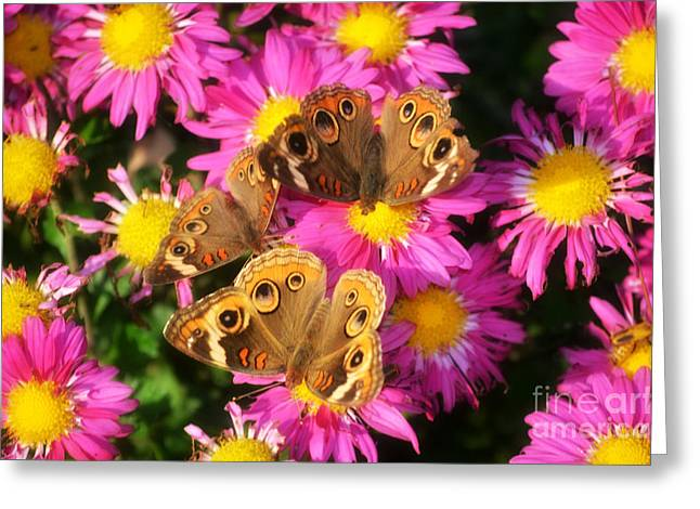 3 Beauty's Butterflies On Mum Flowers Greeting Card by Peggy Franz