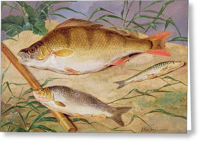An Angler's Catch Of Coarse Fish Greeting Card by D Wolstenholme