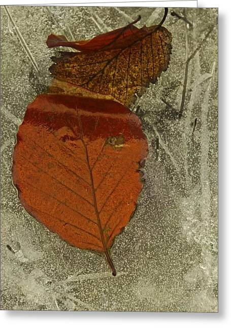 Autumn On Ice Greeting Card by Odd Jeppesen