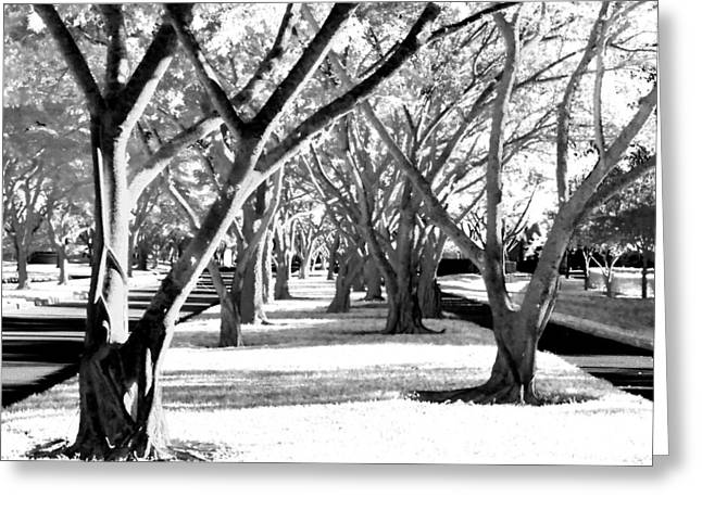 Banyan Trees Greeting Card