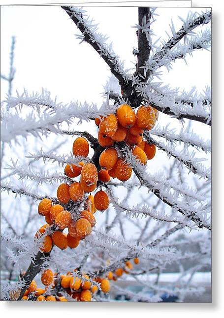 Berries And Frost Greeting Card