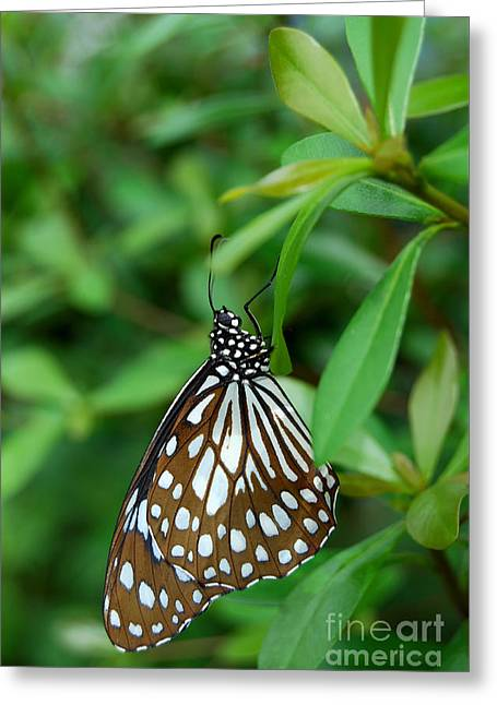 Greeting Card featuring the photograph  Blue Tiger Butterfly by Eva Kaufman