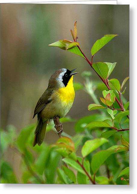 Greeting Card featuring the photograph  Common Yellowthroat Warbler Warbling Dsb006 by Gerry Gantt