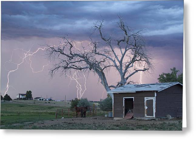 Country Horses Lightning Storm Ne Boulder County Co 76 Greeting Card