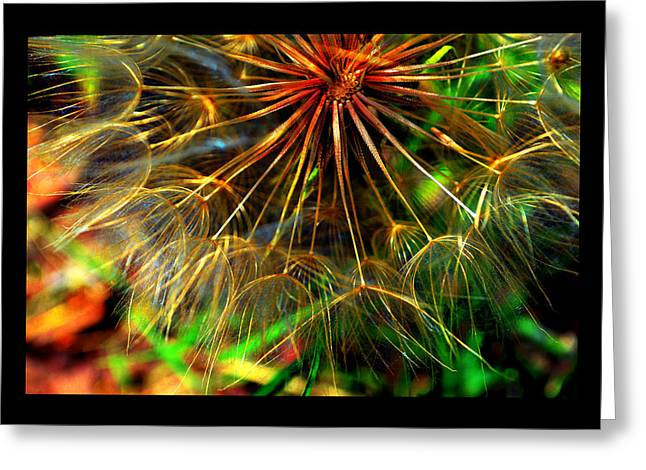 Greeting Card featuring the photograph  Dandelion Dreamtime by Susanne Still