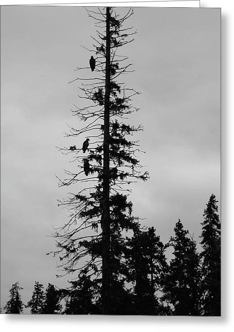 Eagle Silhouette - Bw Greeting Card