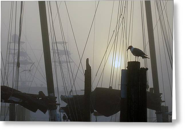 Early Morning At The Boat Docks Greeting Card by Dorothy Cunningham