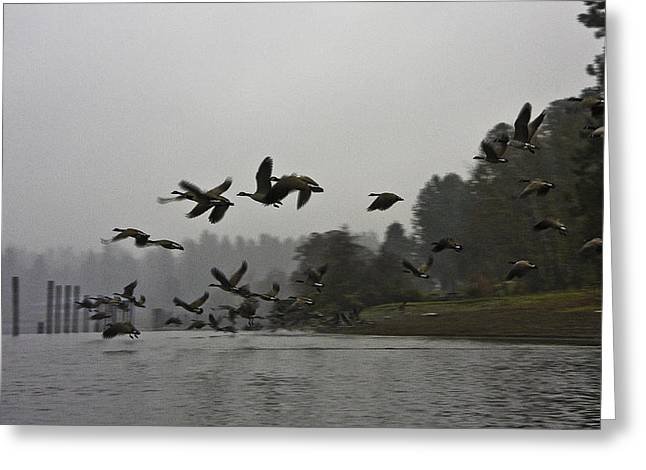 Fall Migration Lake Cd'a Idaho Greeting Card by Grover Woessner