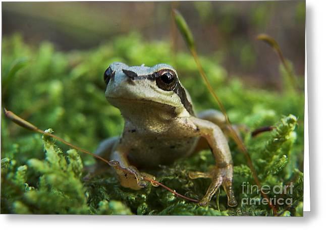 Frog Greeting Card by Odon Czintos