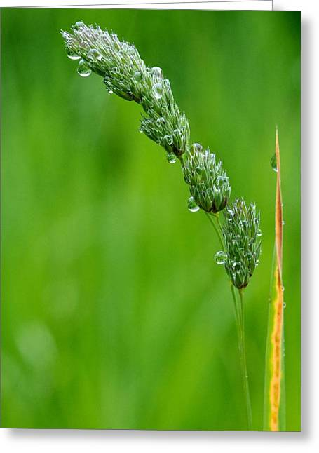 Grass Seed Greeting Card by Scott Holmes