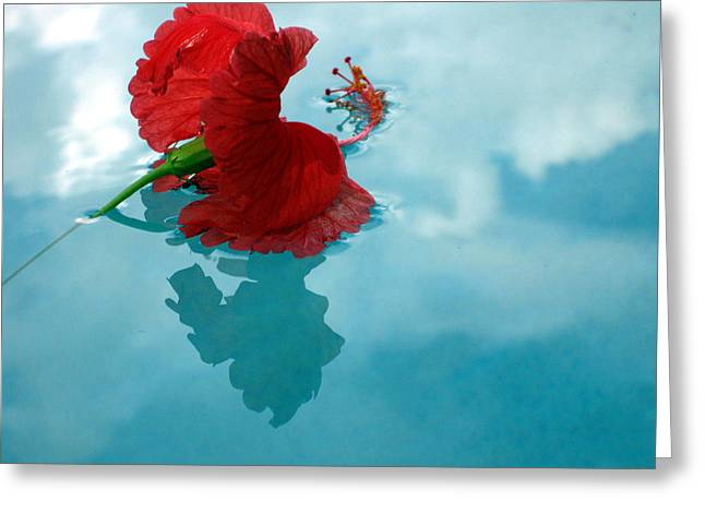 Hibiscus Reflections Greeting Card