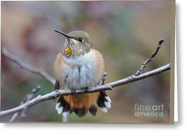 Hummingbird Stretch Six Greeting Card by Suzanne Handel