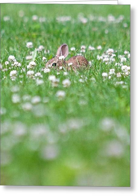 Greeting Card featuring the photograph  I See You by Scott Holmes