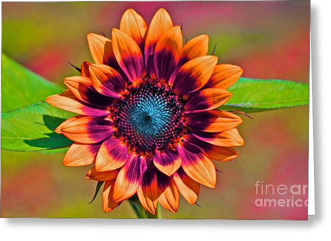 Orange Flowers In Their Buttonholes Greeting Card