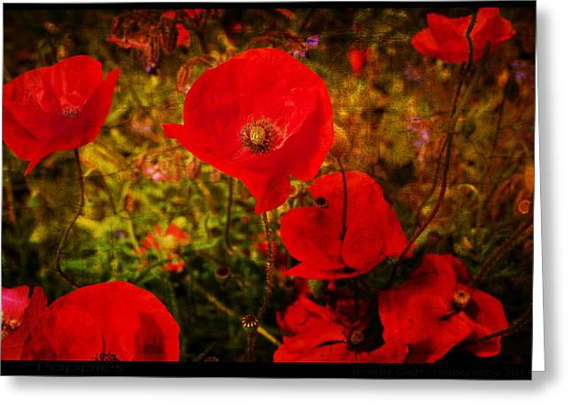 Greeting Card featuring the photograph  Poppies by Beverly Cash