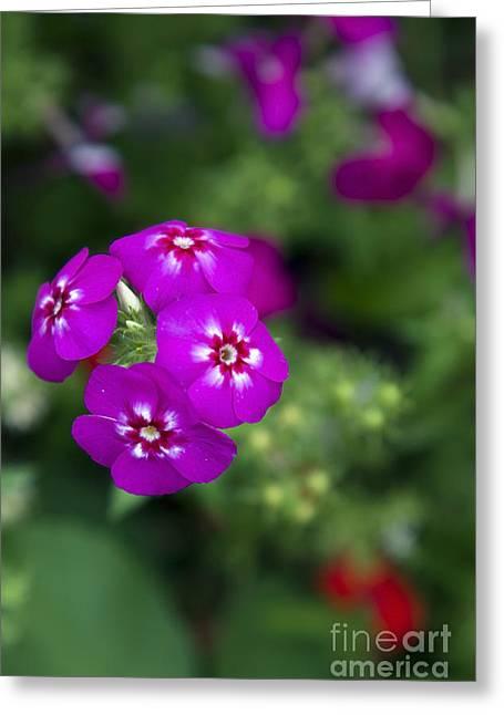 Pretty Flower Greeting Card by Patty Malajak