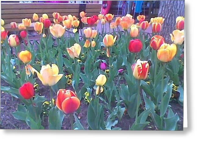 Greeting Card featuring the photograph  Spring And The Magic Of Tulips by Shawn Hughes