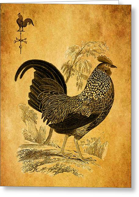 Thanksgiving Rooster Greeting Card by Sarah Vernon