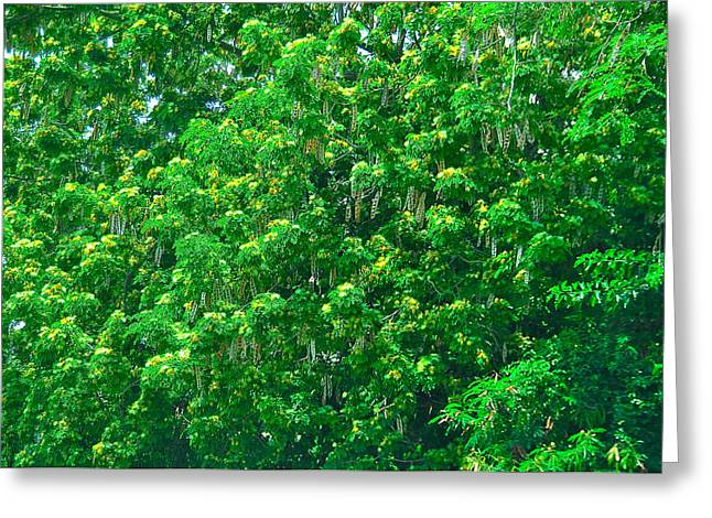Tibit Tree Greeting Card by David Alexander