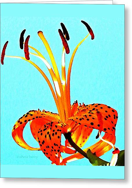 Turquoise And Tiger Lily Greeting Card