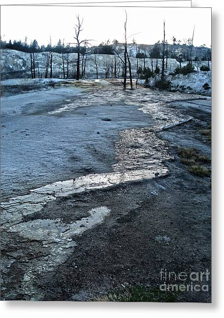 Yellowstone National Park - Minerva Terrace - Desolation Greeting Card by Gregory Dyer
