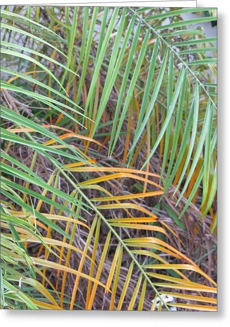 014 Palm Leaves Greeting Card by Carol McKenzie