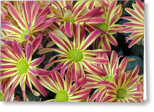 015 Pink And Yellow Flowers Greeting Card by Carol McKenzie