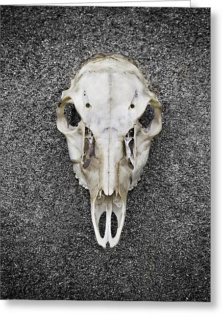 0710-0099 Deer Skull On The Buffalo River Greeting Card by Randy Forrester