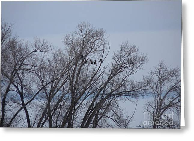 A Gathering Of Eagles Greeting Card by David Bearden