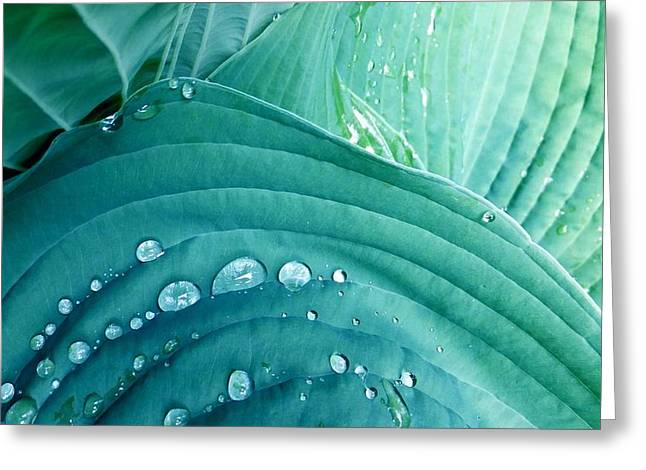 After The Rain Greeting Card by Carolyn Repka