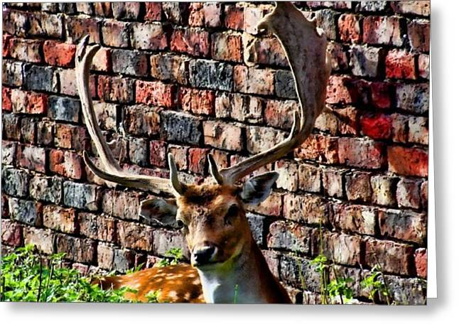 Against The Wall Greeting Card by Isabella F Abbie Shores FRSA