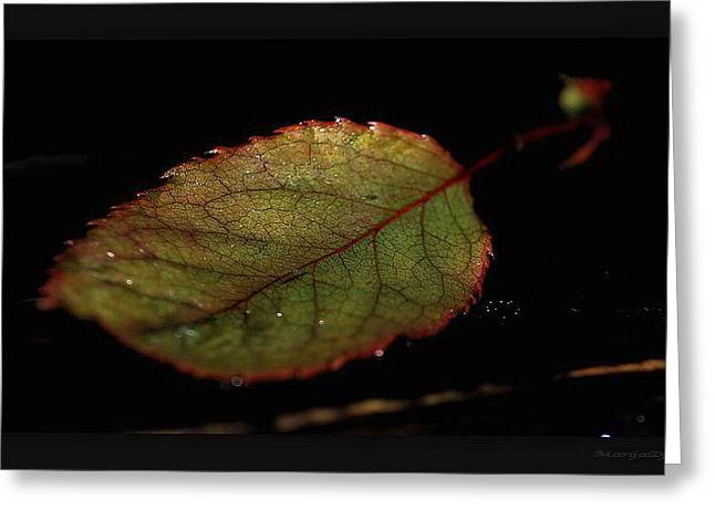 Greeting Card featuring the photograph Changes by Marija Djedovic
